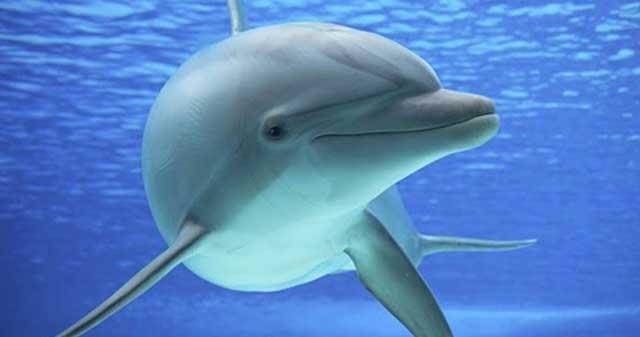 Lumba-Lumba Memiliki Kulit yang Kebal Parasit