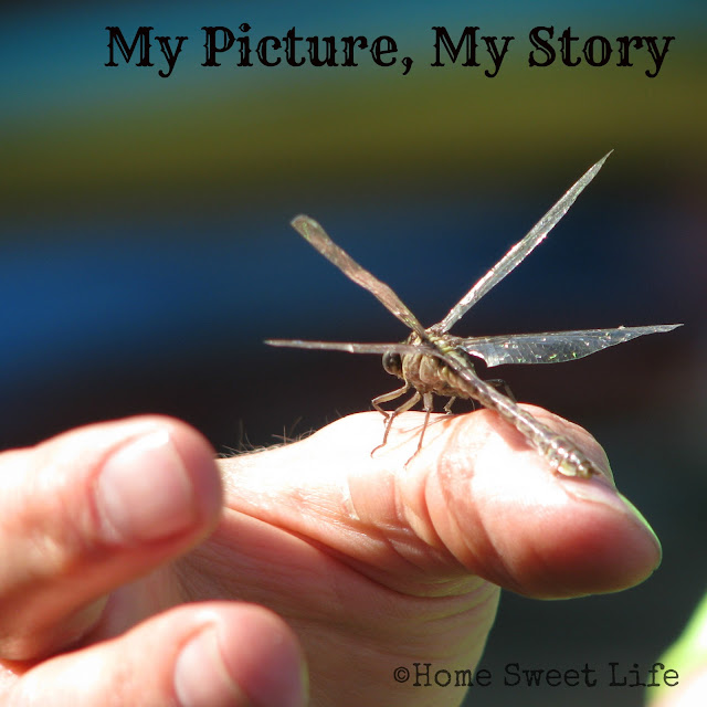 my picture my story, dragonfly, Indiana rivers, botanists