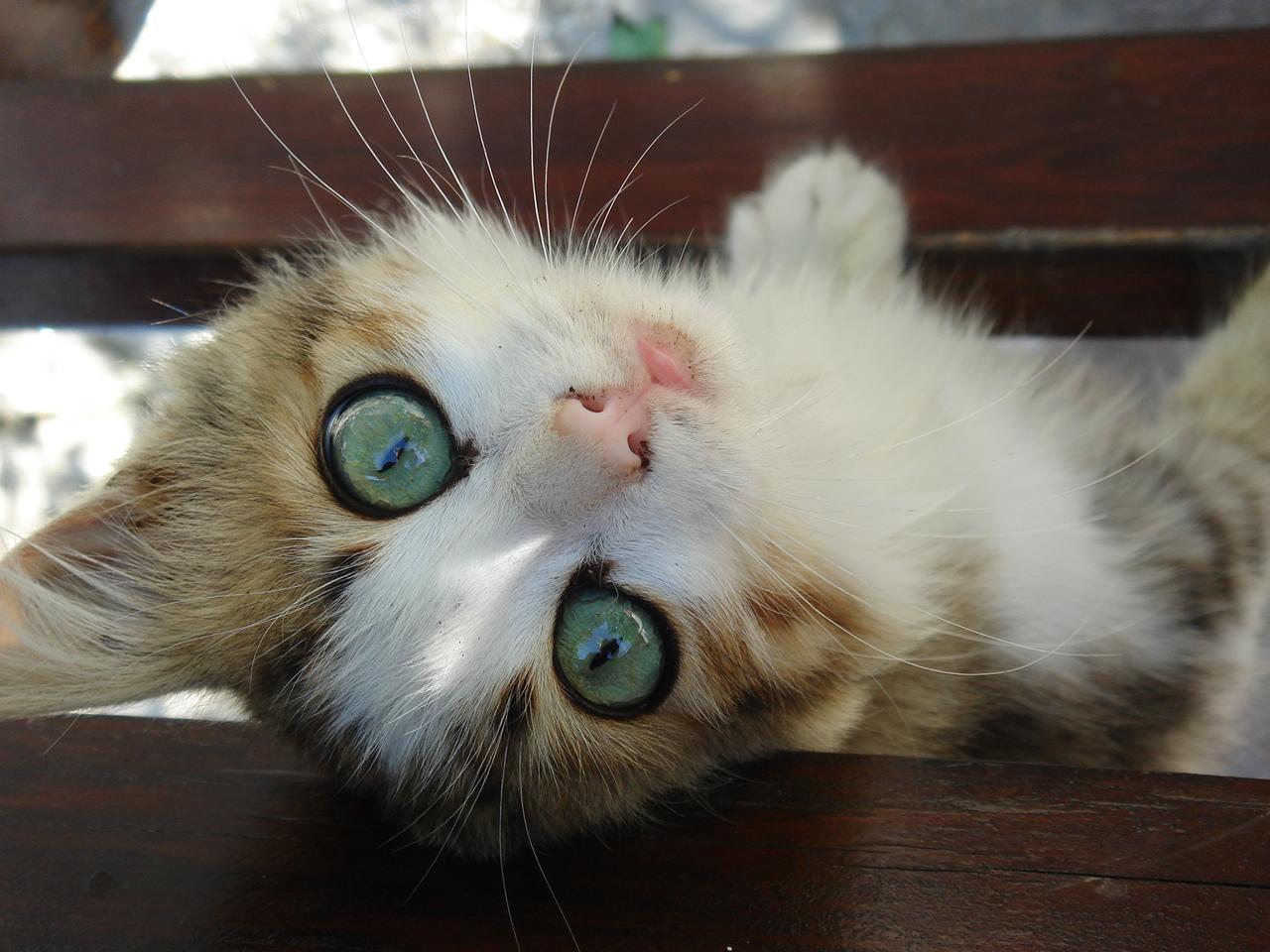 cute cat with big - photo #12