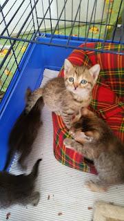 Loro sono: Piero, Milo, Saretta e Sofia. 2