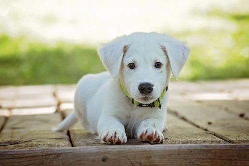 Beste puppy voer