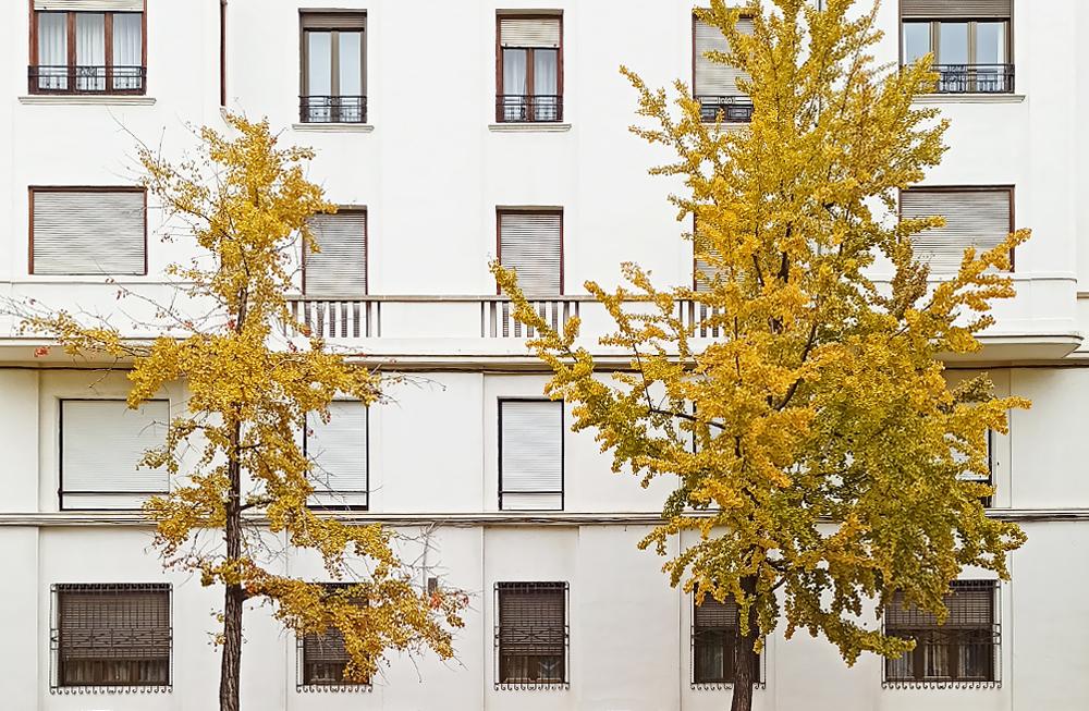 zaragoza otoño fotografía ginkgo
