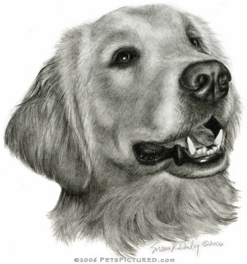 08-Golden-Retriever-Susan-Donley-Cats-and-Dogs-Featured-in-Pencil-Portraits-www-designstack-co