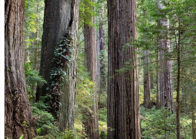 #كاليفورنيا : قطع إمدادات الكهرباء لمخاوف من حرائق الغابات