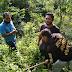 Kadis DLH bersinergi dengan Perbekel Desa Cempaga melakukan penghijauan