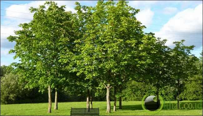 Plastik Meniru Pohon