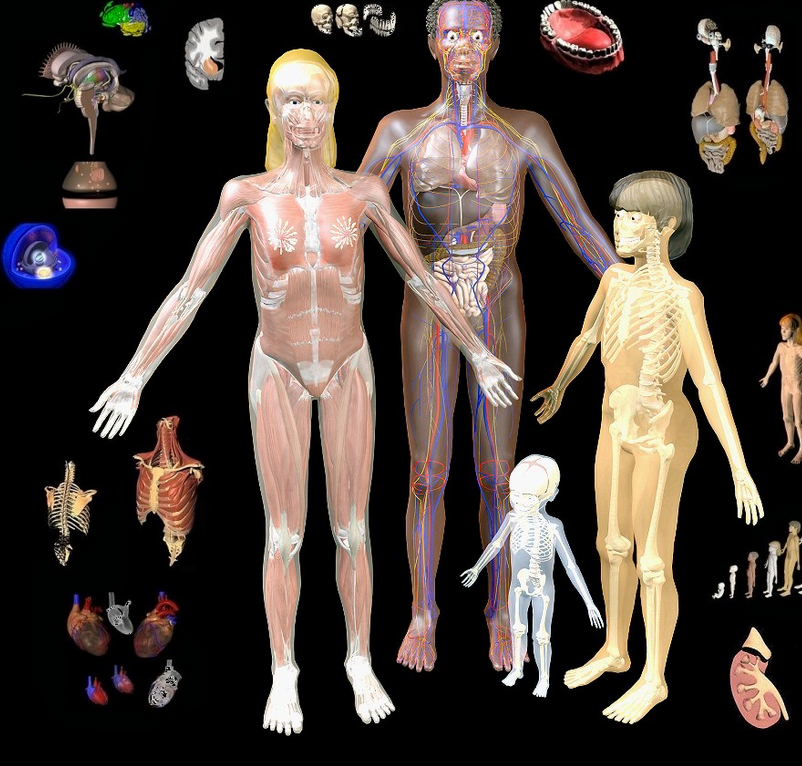 Bodymaps A Great Tool To Explore Human Body In 3d Educational