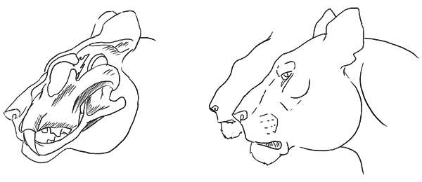Scribbling and studies...: More cat studies- from ken