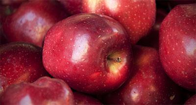 ΚΑΣΤΟΡΙΑ: Αυξημένη σε σχέση με πέρσι η παραγωγή μήλων