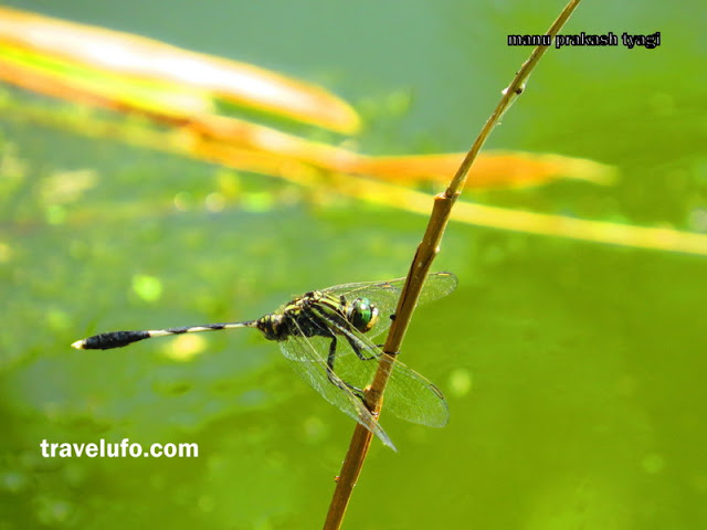 insect sanjay van delhi