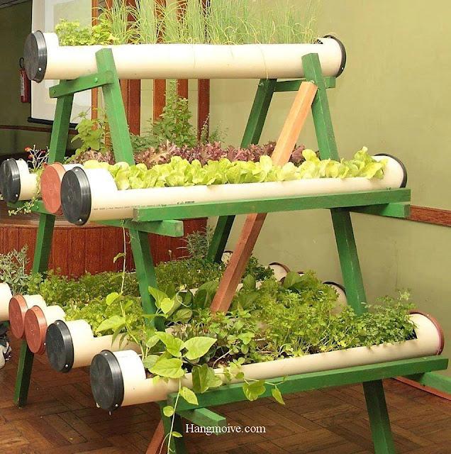 Bằng ống nước PVC không dùng đến ta cũng có thể tận dụng để trồng rau một cách đẹp mắt.