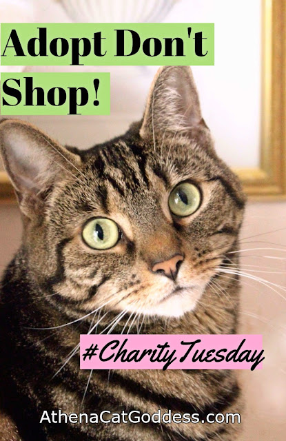 Charity Tuesday: Adopt Don't Shop