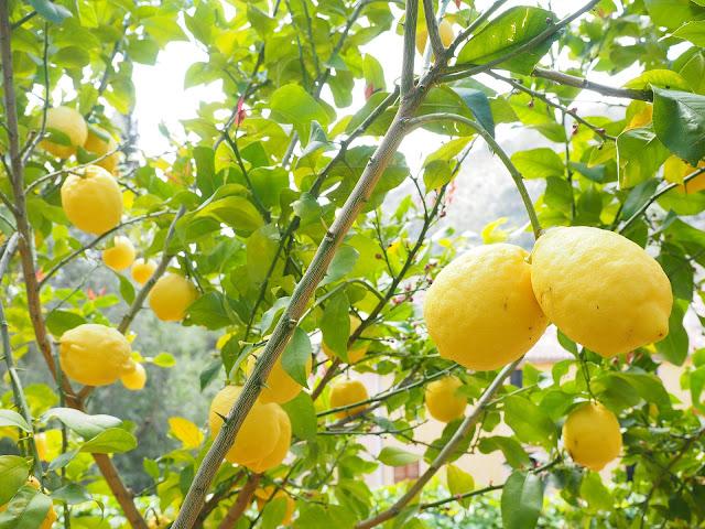 قشر هذه الفاكهة تقتل الجراثيم