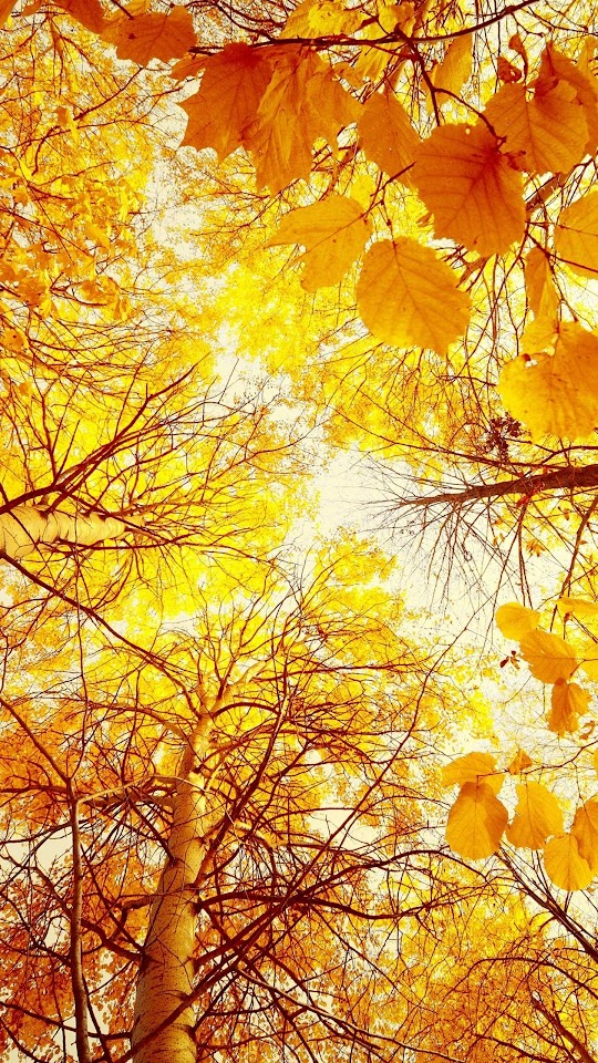 Autumn Yellow Woods   Galaxy Note HD Wallpaper