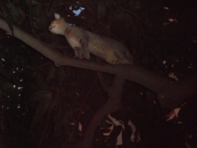 A cat climbing tree: Pictures