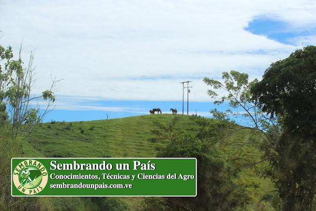 paisaje agrícola con animales