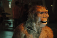 Siapakah Lucy si Australopithecus