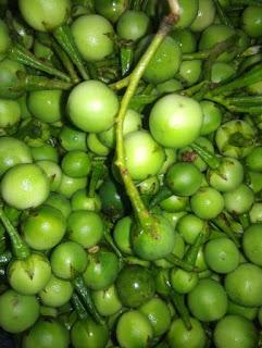 manfaat buah takokak