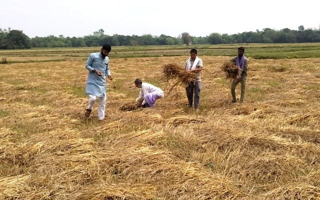 ओलावृष्टि से किसानों को हुई भारी तबाही, आम व गेंहू की क्षति
