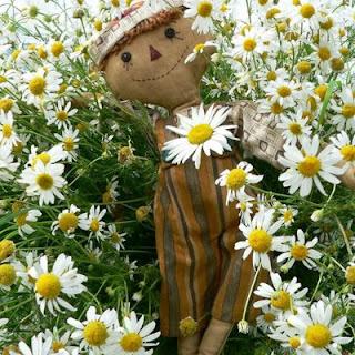 Papatya ile ilgili aramalar papatya çiçeği  papatya faydaları  papatya sandalye  papatya şiir  papatya fiyatları  papatya sözleri  papatya hiraizerdüş  papatya resmi