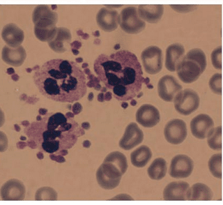 Trombosit fonksiyon testi trombositler
