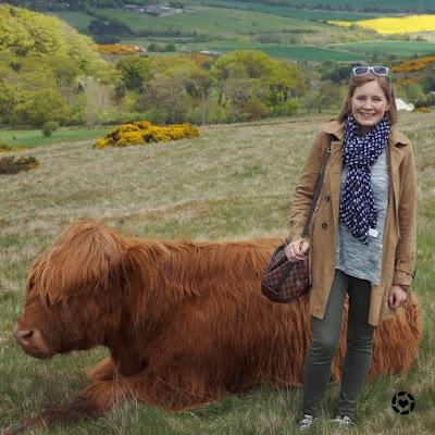 awayfromtheblue Instagram | meeting a Highland Cow at Swanston olive skinny jeans grey knit outfit