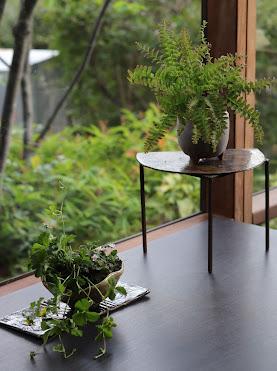 高さのある台にのった小さな鉢盆栽と長方形の陶板にのった小さな鉢盆栽