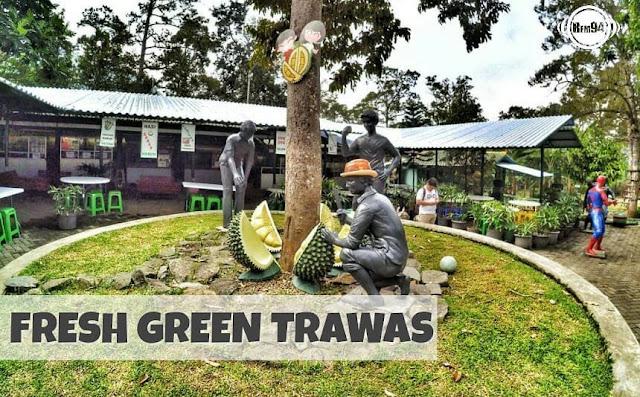 fresh green trawas