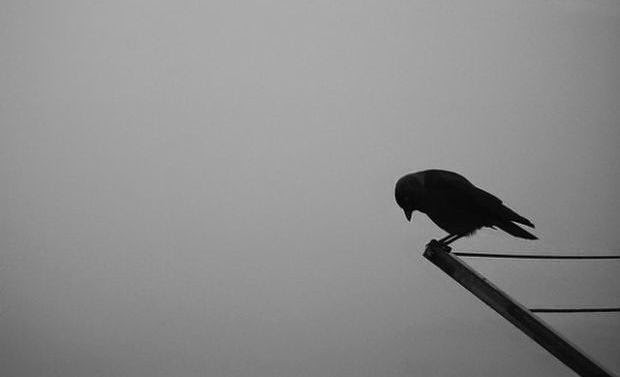 Lonely Girl Wallpaper With Quotes Lonely Mother Bird I M So Lonely