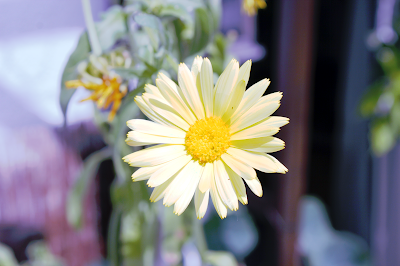 Blüte. | Arthurs Tochter kocht. Der Blog für Food, Wine, Travel & Love