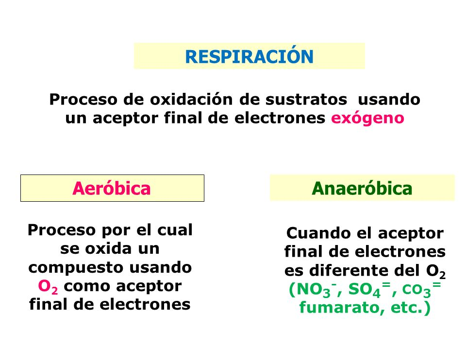 Que es el anaerobio en biologia