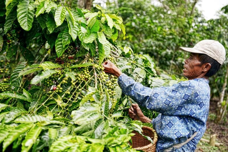International Coffee Day 2020 5