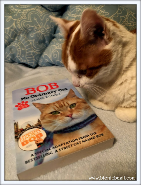 Amber - Bob No Ordinary Cat Give Away ©BionicBasil®Feline Fiction on Fridays