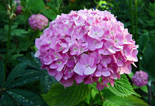 Conosciuto ilclanmariapia: Oroscopo e fiori MB22