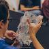 Recife recebe edição especial do maior evento Hacker da América Latina
