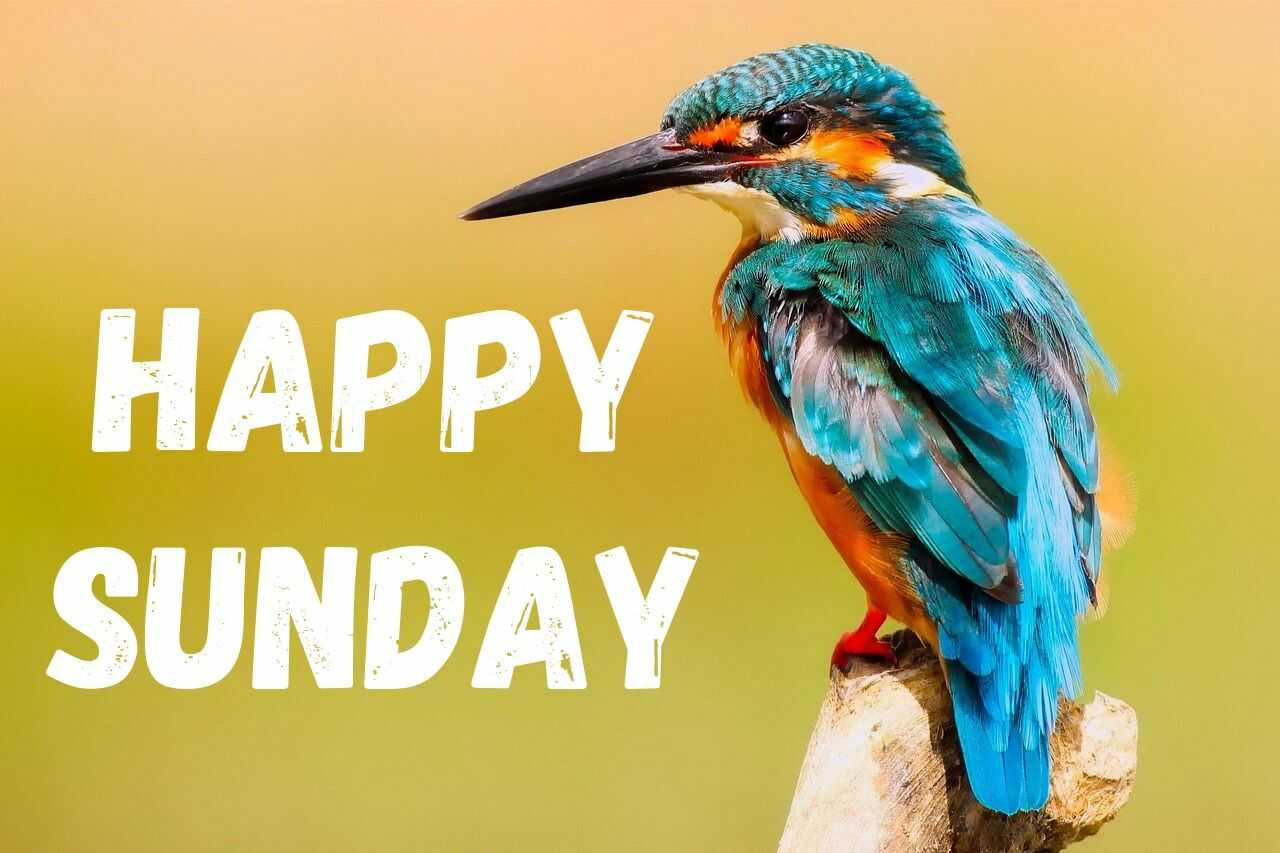 Happy Sunday Images with Bird