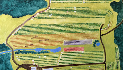 Painted map of an orchard showing every tree