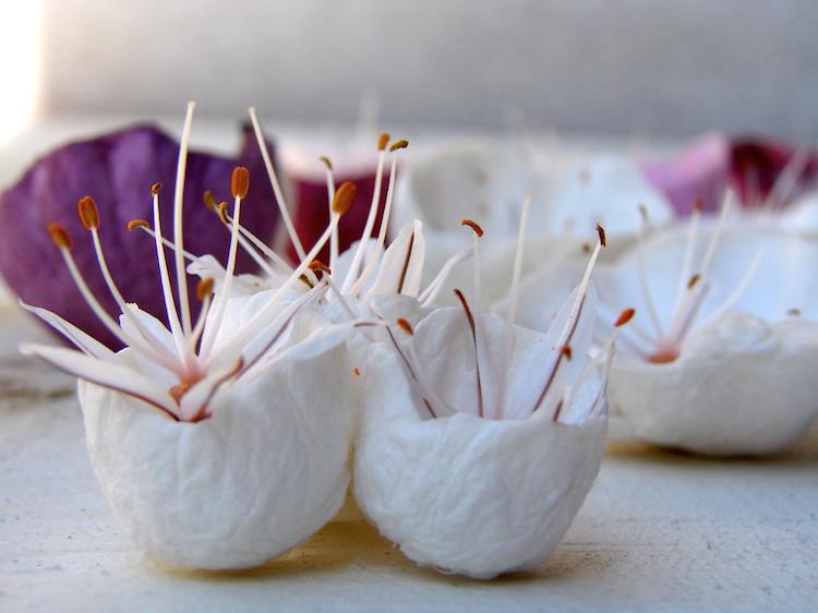 Asfodelo e fiori di carta per un centrotavola ecologico bianco, giallo, marsala