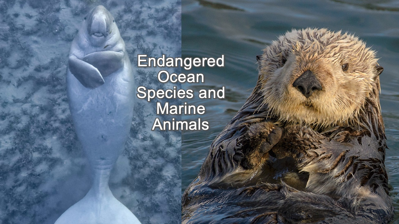 10 Endangered Ocean Species and Marine Animals That Need Our Help