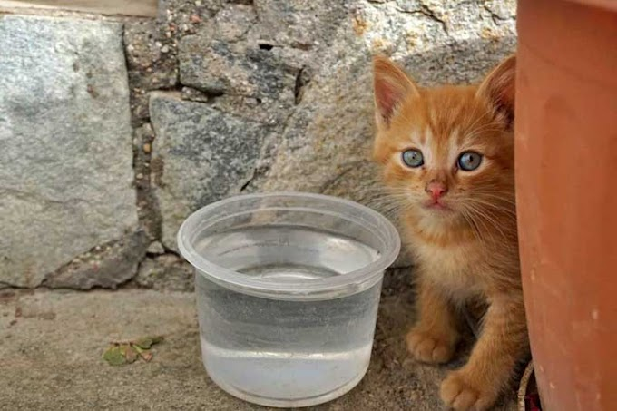 Δ. Βέροιας: Λίγο νερό και σκιά για τα αδέσποτα ζώα λόγω του καύσωνα
