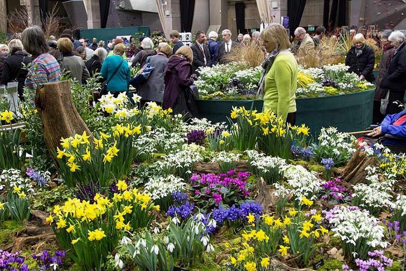 Feria de plantas con narcisos, eleboros y galanthus