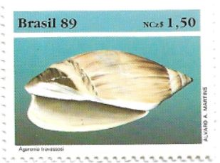 Selo molusco Agaronia travassosi