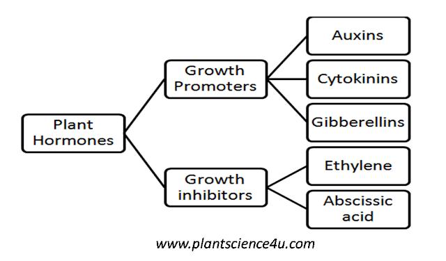 Phytohormones (Plant Hormones)