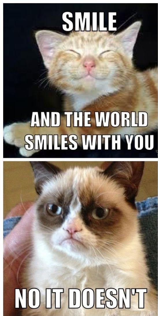 Grumpy Cat Memes 3