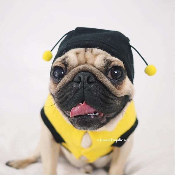 18 chú chó hóa trang còn sành điệu hơn bạn nhiều
