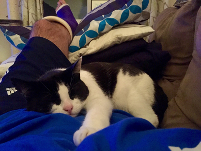 black-and-white cat on lap of man with leg in a cast