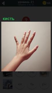 Рука и кисть с пальцами, которые расставлены в стороны