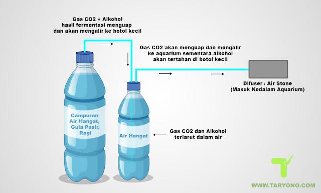 Cara Mudah Membuat CO2 DIY untuk Aquascape