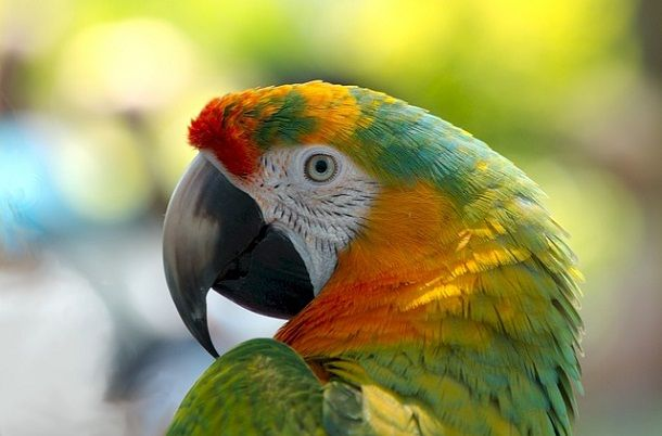 information-about-parrot in hindi