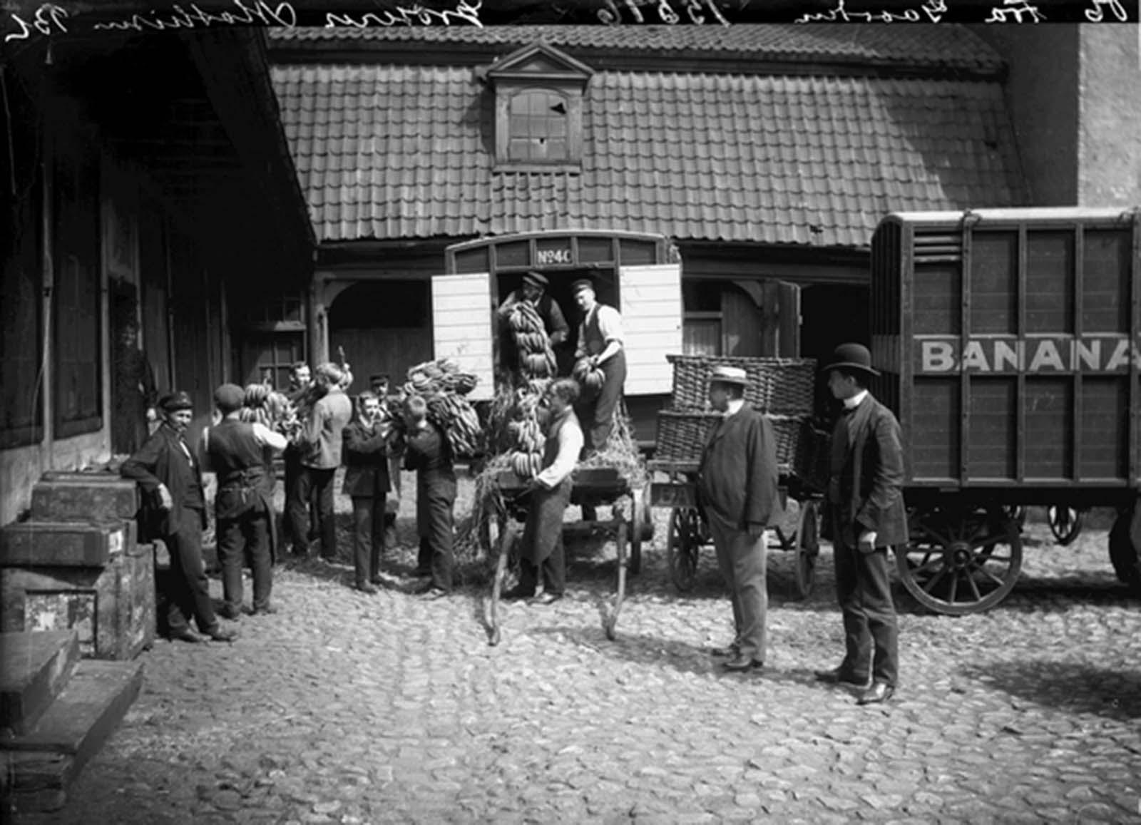 Los primeros plátanos en Noruega, 1905